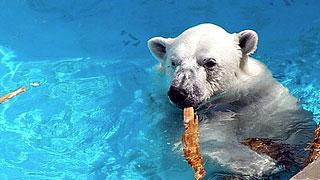 ★入場チケット付★男鹿水族館GAO「シロクマ」「ペンギン」たちに逢いにいこう♪プラン